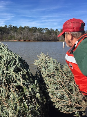 tree recycling at Thurmond lake