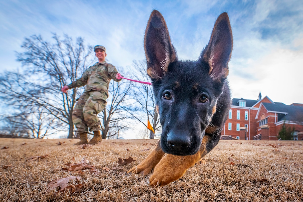 An Army ROTC cadet in uniform walks a dog.