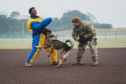 Yokosuka Holds Military Working Dog Joint Training