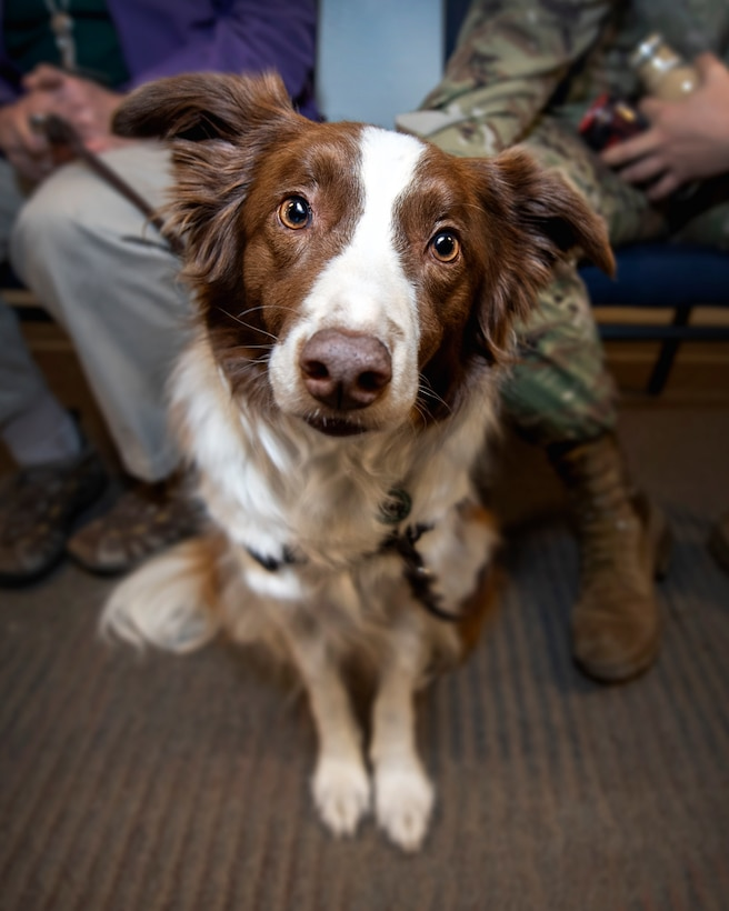 Keeper, Hope Animal Assisted Crisis Response therapy dog, visited Schriever Air Force Base, Colorado, Dec. 17, 2019 and Jan. 7, 2020. The next visit will be Feb. 4 outside the Building 300 auditorium during lunch. (U.S. Air Force photo by Kathryn Calvert)