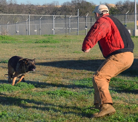 Military working dog Tarzan charges at Staff Sgt. Matthew Erfman, 802nd Security Forces Squadron military working dog handler, during a demonstration at Joint Base San Antonio-Lackland Annex Jan. 23. The demonstration was held before a group of area school superintendents and administrators who toured JBSA-Lackland at the invitation of JBSA leaders.