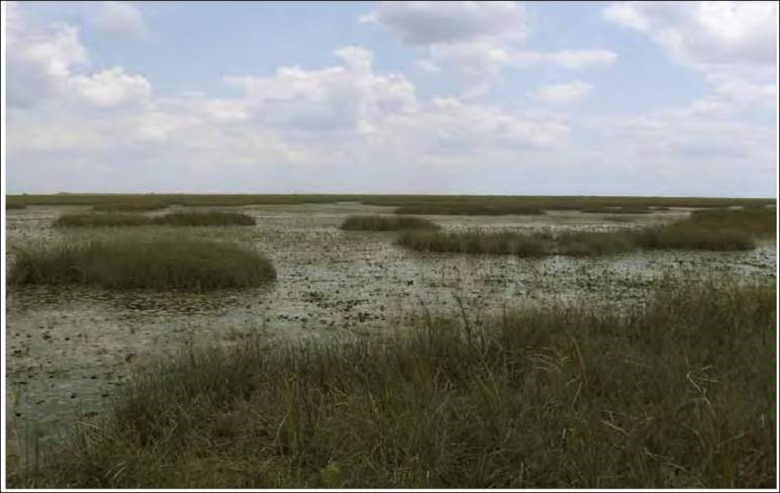 Photo of Everglades ridge and slough landscape in Water Conservation Area 3A
