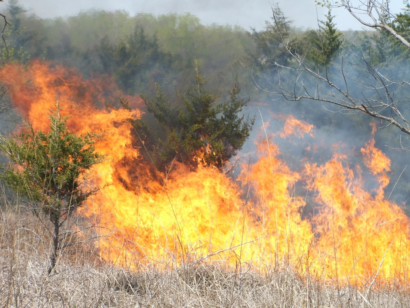 A fire with tall flames burns grasslands and a few small trees.
