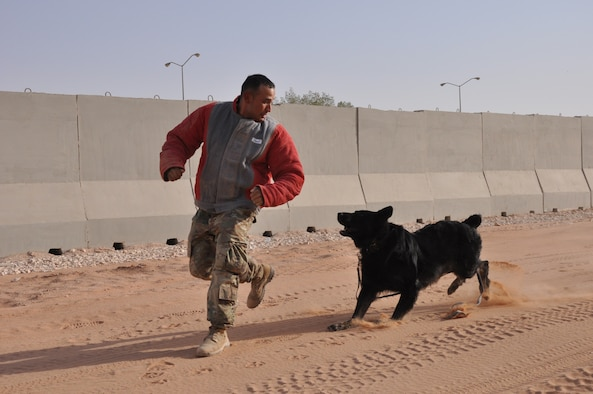 Military working dog handlers from the 378th Expeditionary Security Forces Squadron conduct a demonstration of restraint tactics at Prince Sultan Air Base, Kingdom of Saudi Arabia.