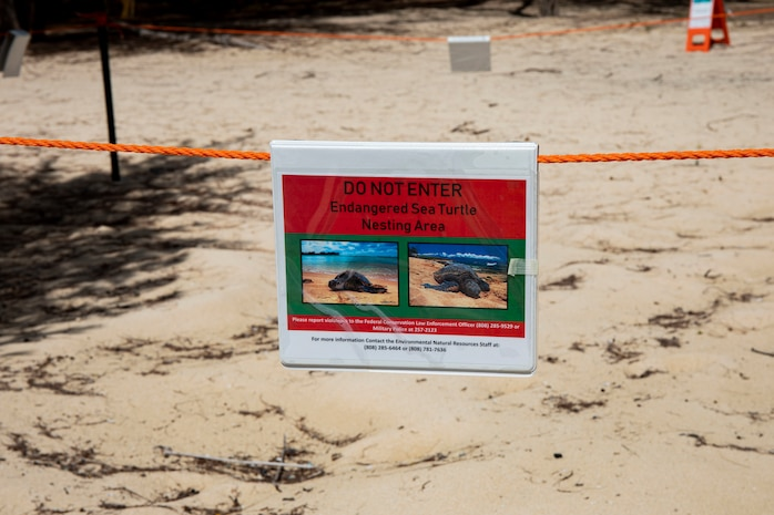 Personnel are monitoring sea turtle nests aboard Marine Corps Training Area Bellows, MCBH, June 10.