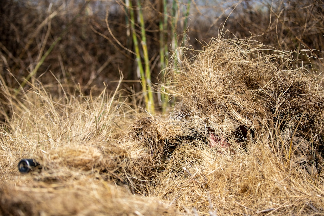 A U.S. Marine conceals himself during an exercise in the Romeo Training Area on Marine Corps Base Camp Pendleton, Calif., July 27.