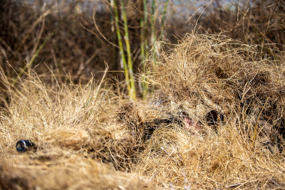 A Marine conceals himself in dry brush.