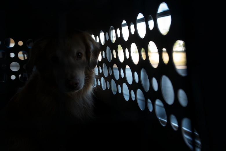 Photo of a dog sitting in its kennel.