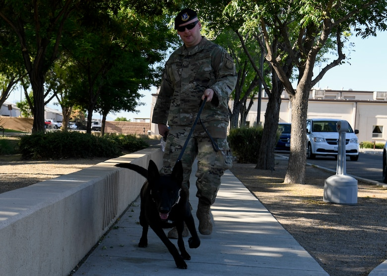 A dog walks with his handler