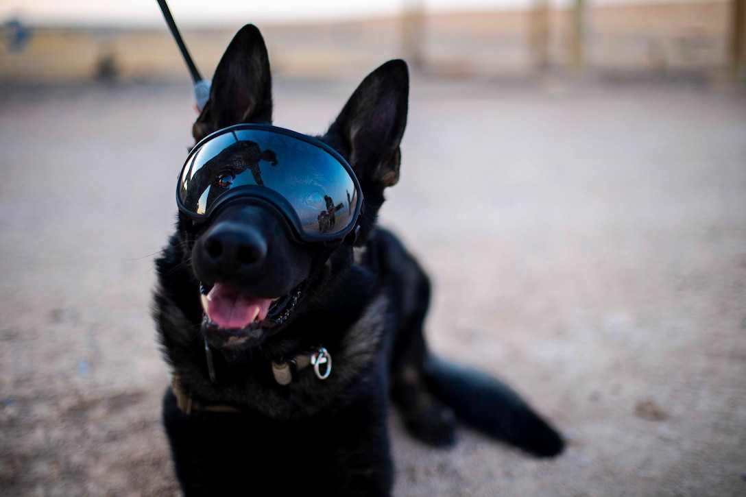 A dog wearing goggles lies on the ground.