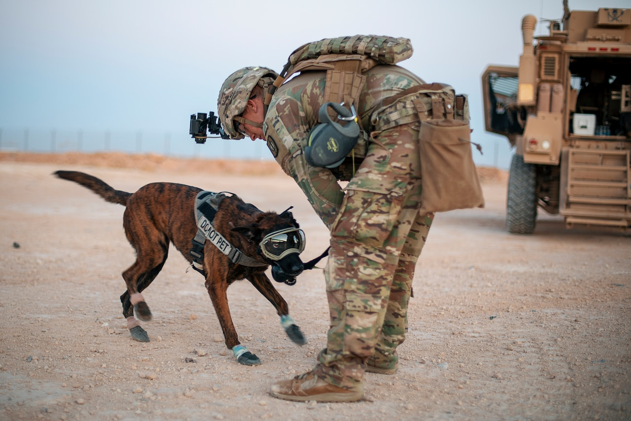 A man in a military uniform plays with a military working dog.