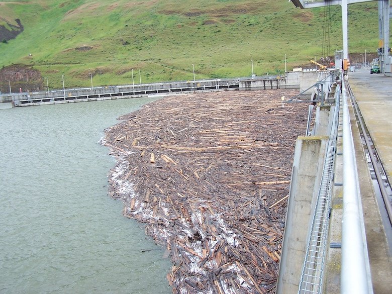 Debris built up in the forebay of Little Goose Lock and Dam, 2017.