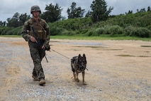 Lance Cpl. Carl Vanpetten, a military working dog handler with 3rd Law Enforcement Battalion (LEB), and Corado, a military working dog, patrol during a training exercise at Kin Blue, Okinawa, Japan, June 11, 2020. Corado is a patrol explosion detection dog (PEDD). PEDDs are used for their scouting abilities to sniff out explosives during patrols.