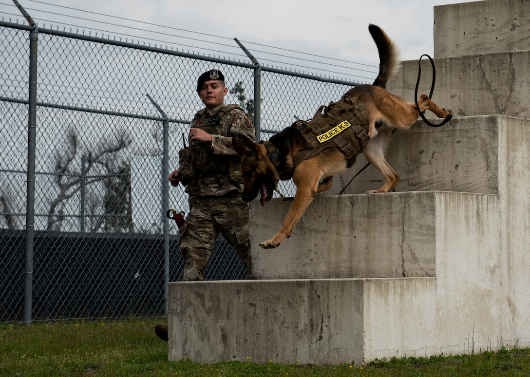 Sunny, a 325th Security Forces Squadron military working dog, and his handler, Staff Sgt. Jason Vogt, run through an obstacle course used for cardio training at Tyndall Air Force Base, Florida, March 3, 2020. Cardio workouts and training techniques are part of the daily routine for MWD duos. This photo was taken while doing a demonstration for K-9 Veterans Day. (U.S. Air Force photo by Staff Sgt. Magen M. Reeves)