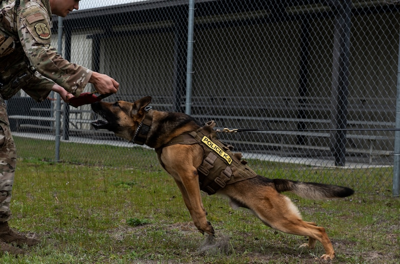 Sunny, a 325th Security Forces Squadron military working dog, lunges at a piece of equipment used to train K-9s on their bite technique at Tyndall Air Force Base, Florida, March 3, 2020. Sunny and his handler, Staff Sgt. Jason Vogt, spend multiple hours training together to keep the team sharp. This photo was taken while doing a demonstration for K-9 Veterans Day. (U.S. Air Force photo by Staff Sgt. Magen M. Reeves)