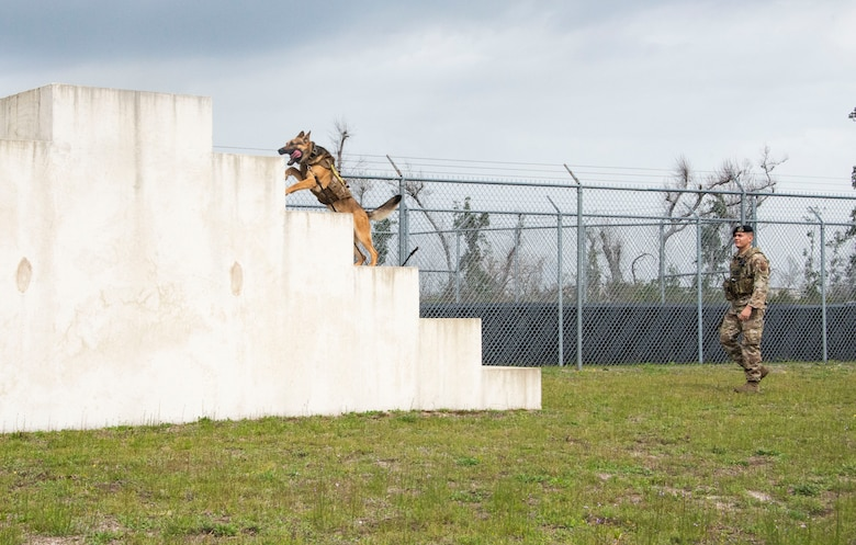 Sunny, a 325th Security Forces Squadron military working dog, bounds up a cement staircase obstacle at Tyndall Air Force Base, Florida, March 3, 2020. Sunny and his handler, Staff Sgt. Jason Vogt, begin their regular duty days with cardio exercise running an enclosed obstacle course. This photo was taken while doing a demonstration for K-9 Veterans Day. (U.S. Air Force photo by 2nd Lt. Kayla Fitzgerald)