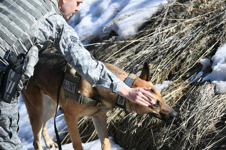 Senior Airman Michelle Winters, 75th Security Force Squadron, guides Joe, a military working dog, to sniff around a training course at Hill Air Force Base, Utah, March 4, 2020. Winters has been Joe's handler for about four months and she said their bond is starting to form. Joe is a single-purpose MWD, trained as an explosive detection dog. (U.S. Air Force photo by Cynthia Griggs)