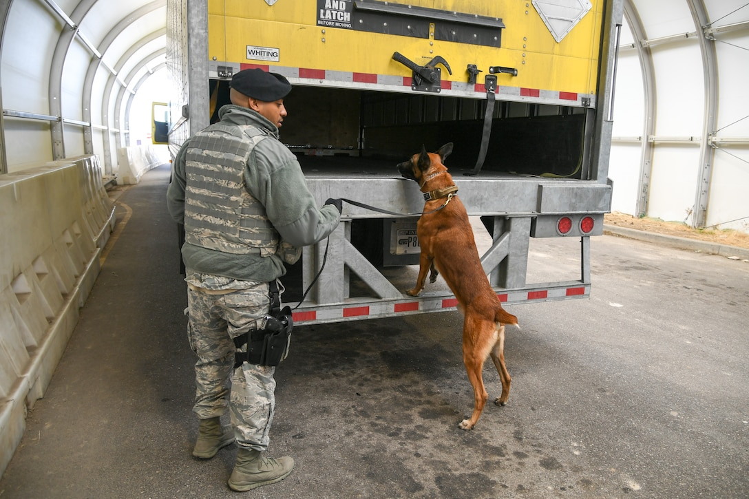 Staff Sgt. Paul Bryant, 75th Security Force Squadron, walks with Xxuthus, a military working dog, during a search of commercial vehicles at Hill Air Force Base, Utah, March 4, 2020. Bryant has been XXuthus's handler for six months. Xxuthus is a single-purpose MWD, trained as an explosive detection dog. (U.S. Air Force photo by Cynthia Griggs)