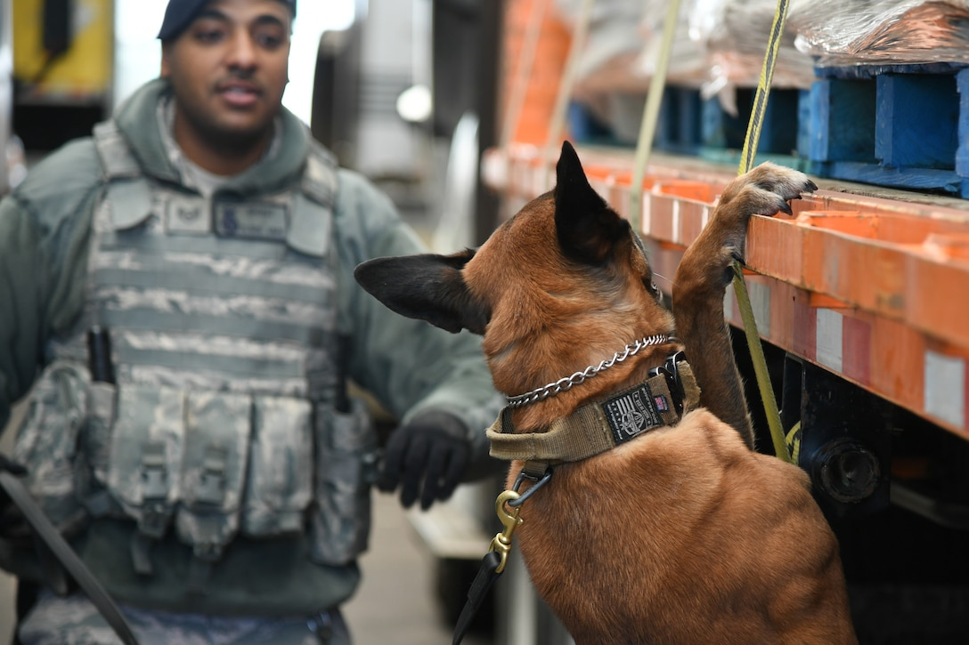 XXuthus, a military working dog assigned to the 75th Security Force Squadron at Hill Air Force Base, Utah, sniffs  a commercial vehicle March 4, 2020. Staff Sgt. Paul Bryant has been XXuthus's handler for six months. Xxuthus is a single-purpose MWD, trained as an explosive detection dog. (U.S. Air Force photo by Cynthia Griggs)