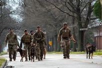 A group of military members walk with their military working dogs down the street.