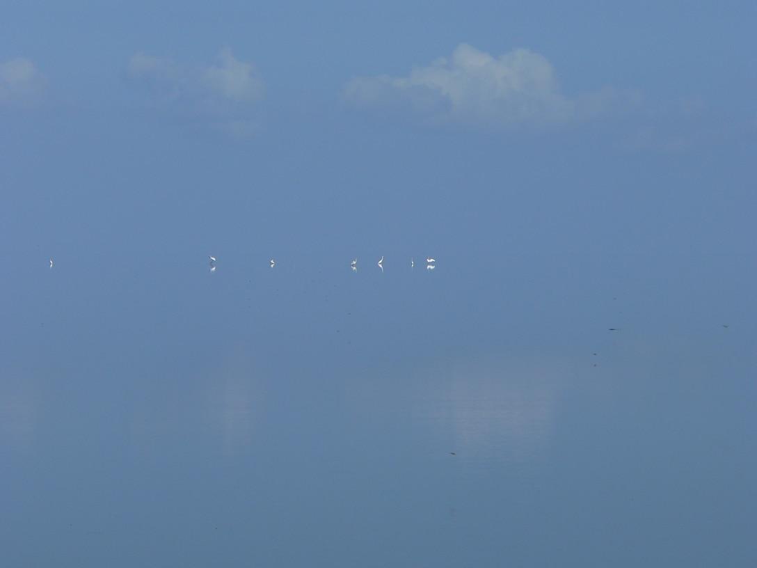 Lake Okeechobee where the water meets the sky