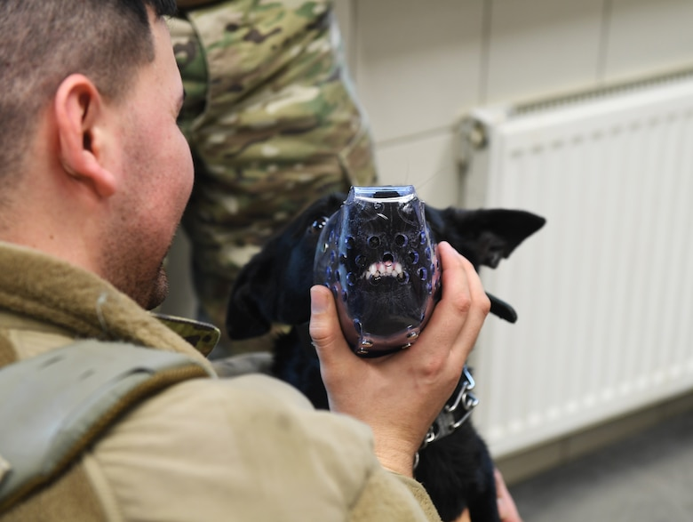 Ccatalina, 52nd Security Forces Squadron military working dog, wears a muzzle during a medical exam at Spangdahlem Air Base, Germany, Mar. 5, 2020. The muzzle is necessary for some MWDs during an exam when blood is drawn or vaccines are given, to protect the vet and technician from being bitten. (U.S. Air Force photo by Airman 1st Class Alison Stewart)