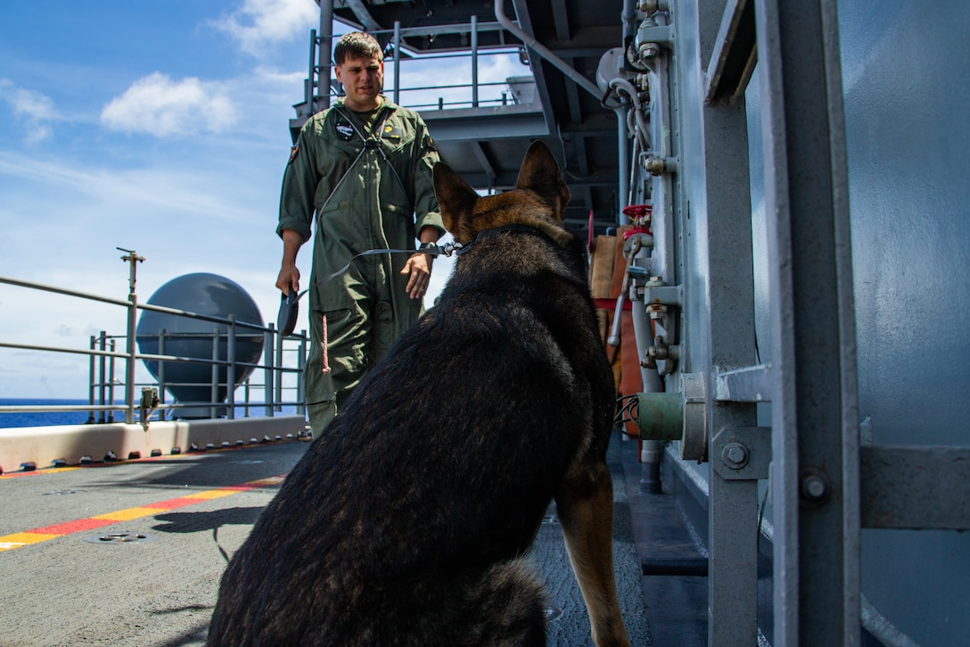 Jack Jack, a military working dog sits after finding explosive materials during an explosive ordnance familiarization class aboard amphibious assault ship USS America (LHA 6).