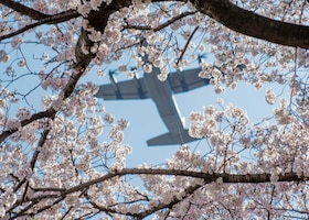 A 36th Airlift Squadron C‐130J Super Hercules flies over cherry blossom trees, March 26, 2020, at Yokota Air Base, Japan.