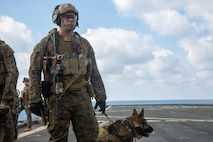 PHILIPPINE SEA (Feb. 4, 2020) Cpl. Andrew Richter, a military working dog handler, and Jack-Jack, a military working dog, with the 31st Marine Expeditionary Unit's (MEU) Maritime Raid Force provide security for their fellow Marines during a visit, board, search and seizure (VBSS) full mission profile aboard the Whidbey Island-class dock landing ship USS Germantown (LSD 42). VBSS incorporates air, ground and surface combat assets from across the Blue-Green team to quickly interdict adversary ships at sea. Germantown, part of the America Expeditionary Strike Group, 31st MEU team, is operating in the U.S. 7th Fleet area of operations to enhance interoperability with allies and partners and serve as a ready response force to defend peace and stability in the Indo-Pacific region. (Official U.S. Marine Corps photo by Lance Cpl. Joshua Sechser)