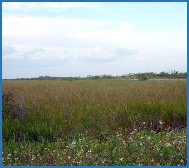 View of Everglades National Park