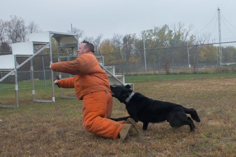 Airman in orange suit is bit by dog