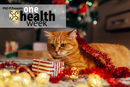 During the holidays, it's important to remember that our favorite treats and feasts may pose dangers to our furry family members. Preventing your animals from ingesting dangerous or inappropriate substances is imperative; prevention is always easier (and less dangerous) than treating! (U.S. Army graphic by Amber Kurka)