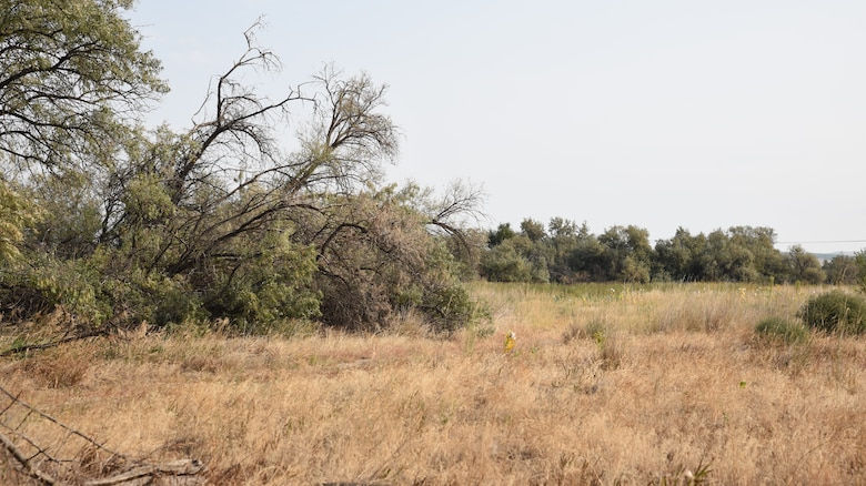 shrub-steppe habitat