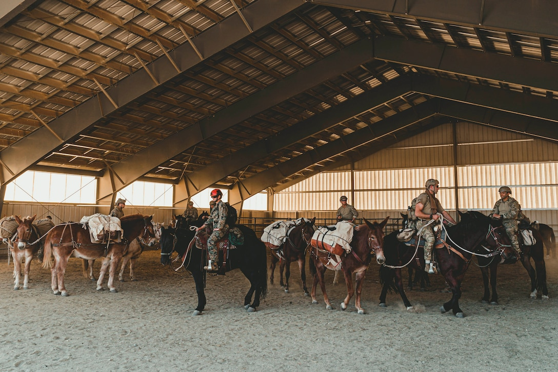Marines ride horses and mules in a barn.