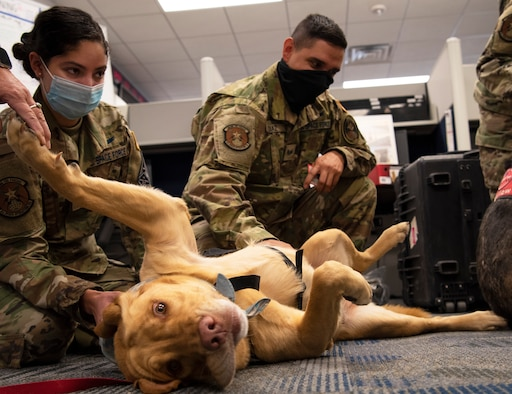 Rigley is loved on by 1st Lt. Yesenia Padilla, 4th Space Operations Squadron mobile operations crew commander, left, and Senior Airman Daniel Diaz, 4th SOPS mobile operations operator, during the weekly Space Team for Airman Resilience therapy dog visit, Nov. 4, 2020, at Schriever Air Force Base, Colorado. STAR is a team that specializes in mitigating military occupation-related stressors. They are made up of mental health professionals, a religious support team, a physical therapist and a physician's assistant. (U.S. Space Force photo by Airman 1st Class Jonathan Whitely)