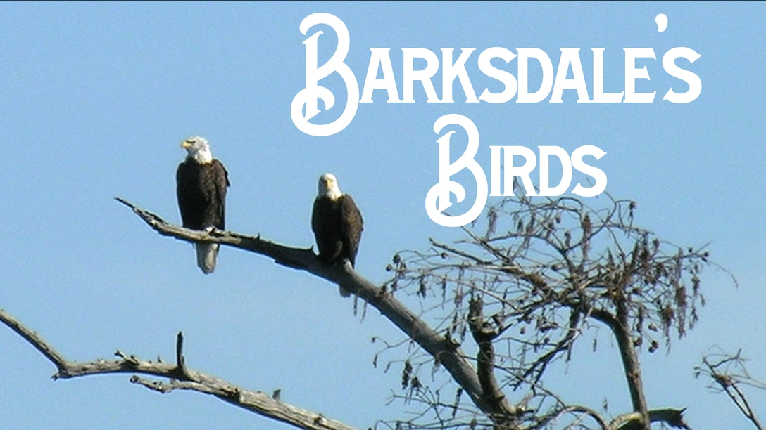 Two bald eagles sit on a tree branch at Barksdale Air Force Base, La. Barksdale receives funding from the Air Force Civil Engineer Center for housing and protecting the nesting and feeding grounds of a group of bald eagles. (Courtesy Photo)