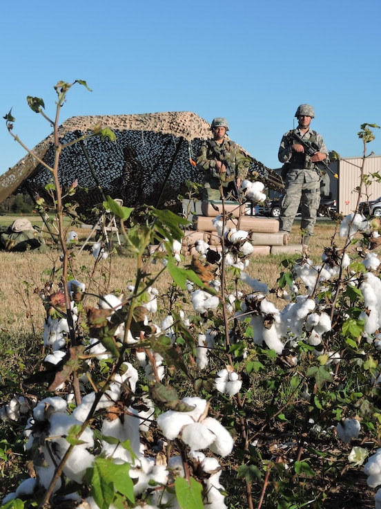 Photo of two Airmen standing in front of a tent next to a cotton field.