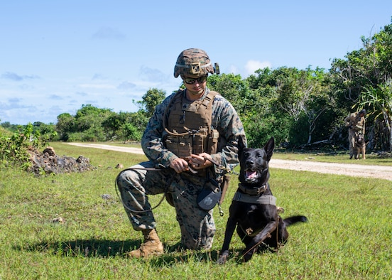 Sgt. Chase McConnell, 3rd Law Enforcement Battallion, keeps Duece calm during a pyro exercise to help military working dogs get used to the sounds of combat on Andersen Air Force Base, Guam Nov. 20. Marines and Airmen exchanged MWD techiques to enhance joint mission effectivness. (U.S. Air Force photo by Staff Sgt. Nicholas Crisp)