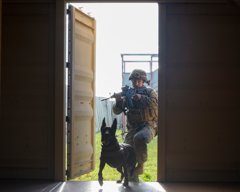 Sgt. Chase McConnell, 3rd Law Enforcement Battallion, and Duece clear out hostiles in an urban training environment on Andersen Air Force Base, Guam Nov. 20. Marines and Airmen exchanged MWD techiques to enhance joint mission effectivness. (U.S. Air Force photo by Staff Sgt. Nicholas Crisp)
