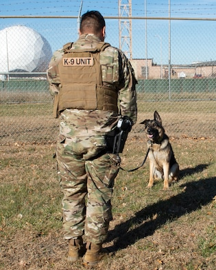 in the foreground a Airman wearing a vest with K9 unit on the backside of vest, he standing in front of a military working dog sitting in front of the Airman