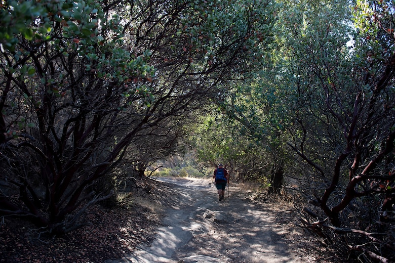 A man walks around the woods during a hike.