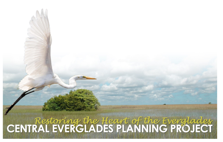 Artwork with Great Egret flying over the ridge and slough landscape of the Everglades with text that says: Restoring the Heart of the Everglades - Central Everglades Planning Project