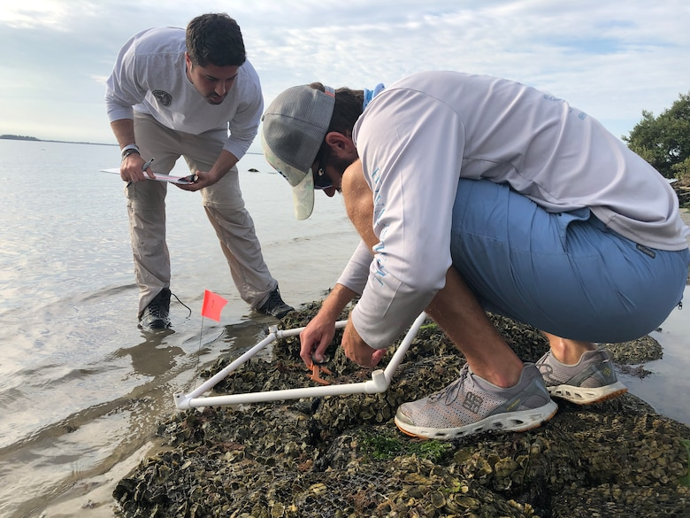 Wildlife biologists monitor the living shoreline at MacDill Air Force Base, Florida, April 2019.