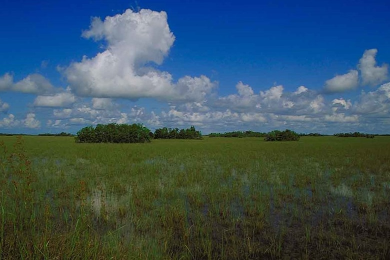 photo of Everglades tree islands in ridge and slough landscape