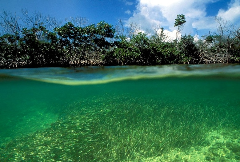Photo of Mangroves and seagrass in Biscayne Bay
