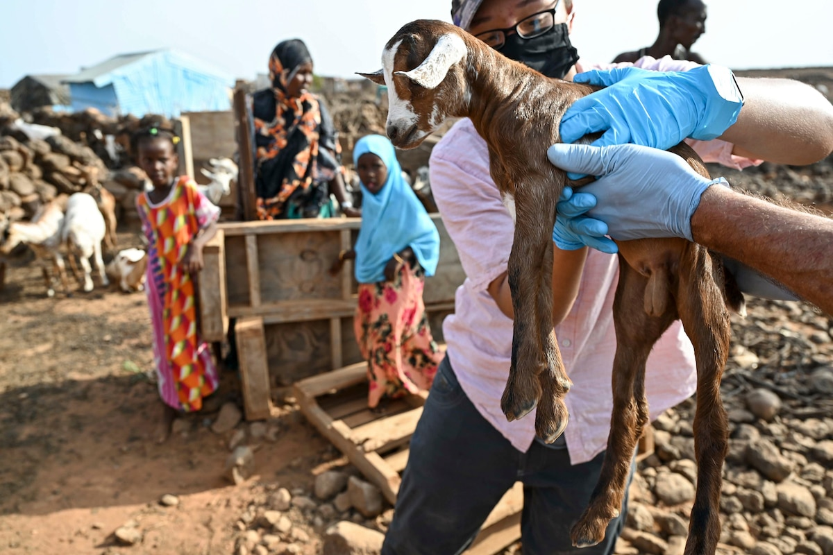 A soldier in civilian clothes reaches out to a baby goat another person is holding outside in a village.