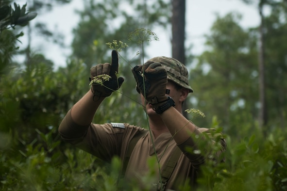 A survival, evasion, resistance and escape specialist with the 1st Special Operations Support Squadron educates 1st Special Operations Wing aircrew members on characteristics of poisonous plants during combat survival training at Eglin Range, Florida, Aug. 13, 2020. Combat survival training ensures personnel maintain critical skills gained at formal SERE training courses, while in a simulated combat environment. CST provides personnel with the opportunity to demonstrate proficiency in survival and recovery tactics, techniques and procedures, under field conditions, utilizing hands-on experiential training. (U.S. Air Force photo by Staff Sgt. Joseph Pick)
