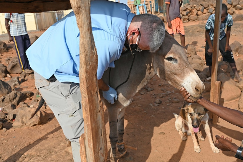 U.S. Army Reserve Maj. (Dr.) Mark Cunningham, 443rd Civil Affairs Battalion Functional Specialty Team (FXSP) preventive medicine veterinarian, in support of Combined Joint Task Force – Horn of Africa (CJTF-HOA), examines a donkey with a stethoscope during a veterinary exchange in the rural village of Ali Oune, Djibouti, August 30, 2020. In partnership with the Djiboutian Ministry of Agriculture, Livestock, and Fisheries, the 443rd CA BN was able to assist the veterinarian for Damerjog, Djibouti, in providing livestock care for the people in the remote desert village.
