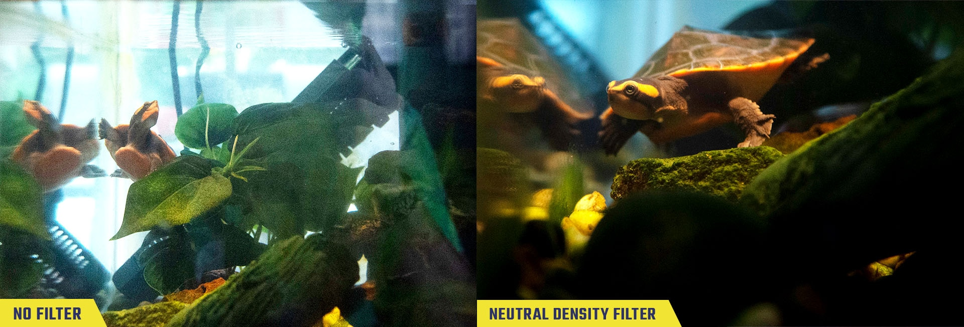 Sample photos of a turtle in an indoor tank aquarium taken with no filter and with the neutral density filter, labeled respectively.