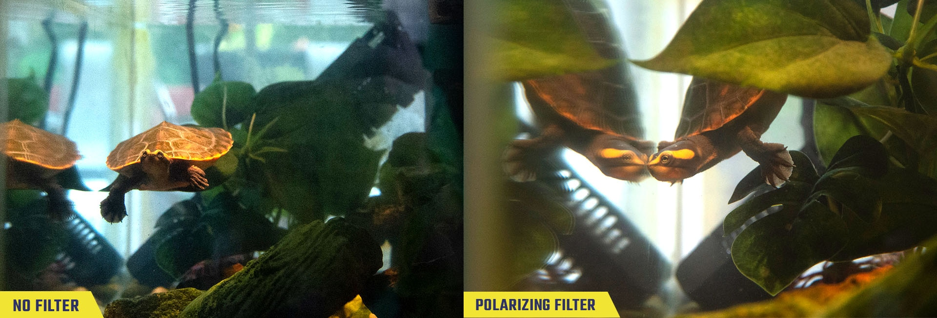 Sample photos of a turtle in an indoor tank aquarium taken with no filter and with the polarizing filter, labeled respectively.